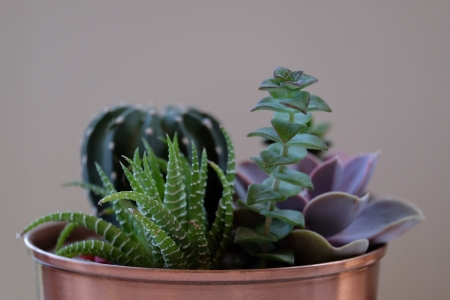 Cacti and succulents - Green, Nature, Cacti, Plants, Succulents