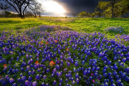 Spring Sunrise in the Texas Hill Country