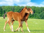 Twins Baby Horses
