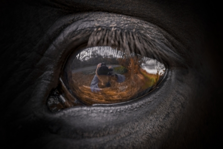 Horse eye - Horses & Animals Background Wallpapers on