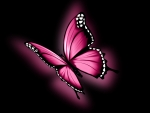 Glowing Pink Butterfly