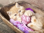 Cat playing with wool