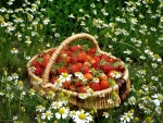 Strawberries in Chamomile