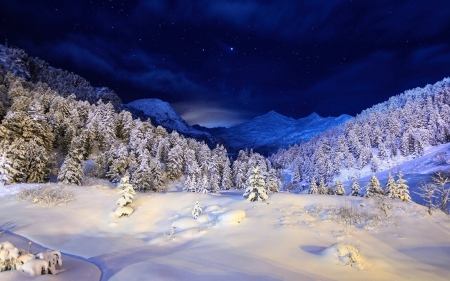 Winter Forest At Night Forests Nature Background Wallpapers On