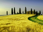 Evergreen Tuscany