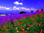 Blooming Flowers Field