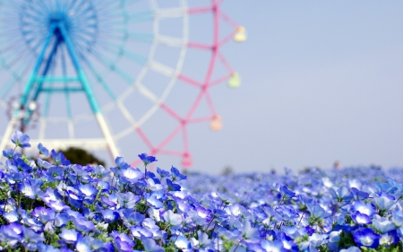 Spring flowers and ferris wheel flowers nature background spring flowers and ferris wheel mightylinksfo