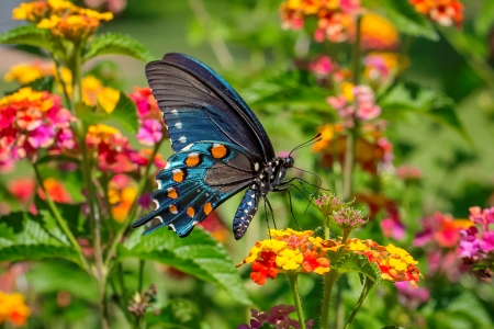 Butterfly On Spring Flower Butterflies Animals Background