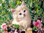 Kitten With Pink Flowers