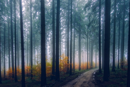 Misty Forest Forests Nature Background Wallpapers On