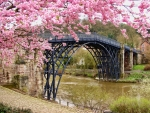 Beautiful blossoms and a bridge