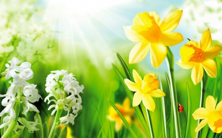 Spring flowers - hyacinth, pretty, lovely, flower, narcissus, spring, beautiful, ladybird