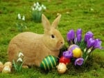 Easter Bunny And Flowers