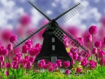 Spring Tulips & Windmill