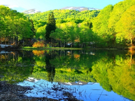 Green Summer Riverbank - forest, shore, trees, lake, mirrored, mountains, summer, nature, river, reflection