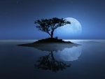 Lonely Tree with Full Moon