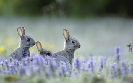 Bunnies rodents animals background wallpapers on - Free funny animal screensavers ...