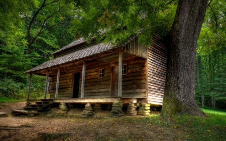Cabin - Brown, Trees, Grass, House, Cabin