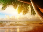 Tropical Sunset Scenery