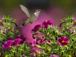 The Flight Of The Hummingbird