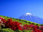 Tea Plantation Mount Fuji Japan