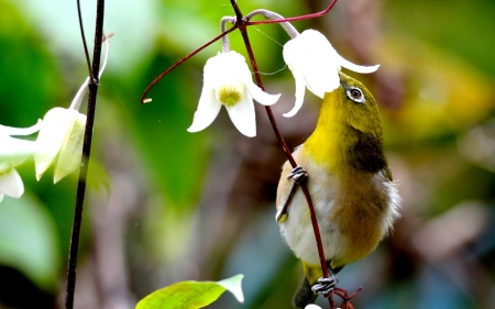 Beautiful Honey Sucker Bird Birds Animals Background Wallpapers