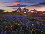 Mt Rainier, Washington