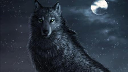 Black Wolf Moon Other Animals Background Wallpapers On Desktop Nexus Image 2366840