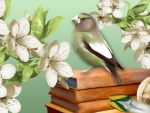 Birds Books and Blossoms