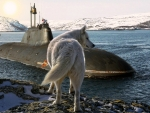 Wolf Checking out a Submarine