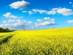 Yellow Spring field