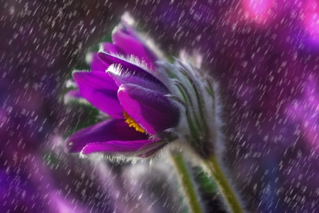 Purple flower flowers nature background wallpapers on desktop purple flower pretty purple flower beautiful spring rain mightylinksfo
