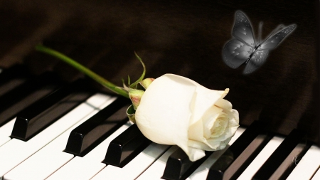 White Rose Piano Keys