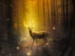 Magical deer