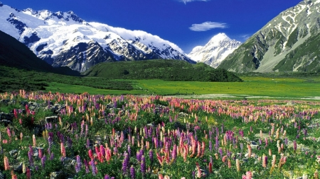 Meadow in Spring - plants, mountains, blossoms, sky, floral