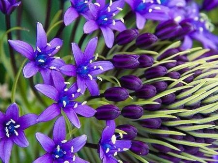 Little purple flowers flowers nature background wallpapers on little purple flowers mightylinksfo