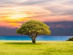 Lone Tree in the Shore