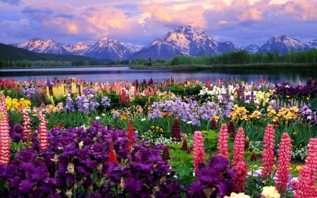 Beautiful Flowers And Mountain