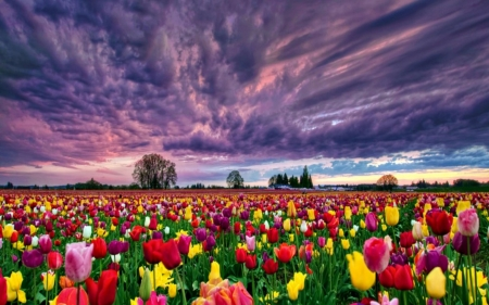 Spring Flowers Field Fields Nature Background Wallpapers On