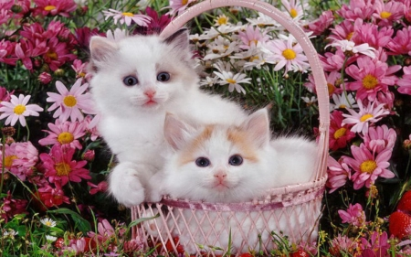 Cute Kittens on Basket - kittens, cat, basket, animal, flowers, cute