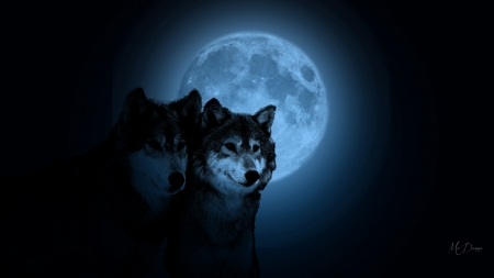 Wolf Pair Blue Moon - lobo, loup, night, blue, moon, wolf, wolves