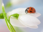 Ladybug And Lily Of The Valley