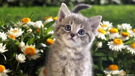 Cute Baby Kitten Cats Animals Background Wallpapers On Desktop