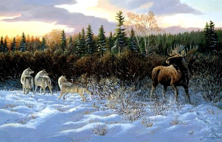 Winter Confrontation - wilderness, moose, snow, wolves