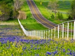 Beautiful scenery in Texas