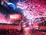Night Street in Cherry Blossoms