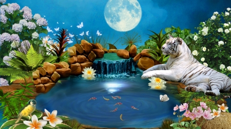 White tiger at koi pond 1920x1080 only restart for Koi pool opening times