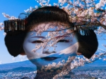 Geisha With Cherry Blossoms