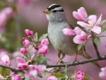 Bird on a Blossom Branch
