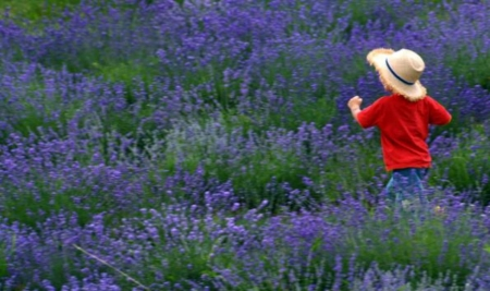 Field Of Lavender - Lavender, Field, Child, Hat, Running